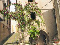 Venafro, fiori per rendere più attraente la città
