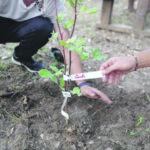 Bosco Fantine rinasce, verso la piantumazione di mille nuovi alberi